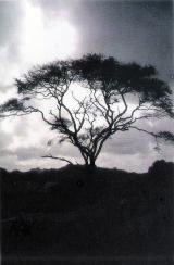 <p>3rd Place - Sashinka Panditha koralage ‐ Black and white</p>